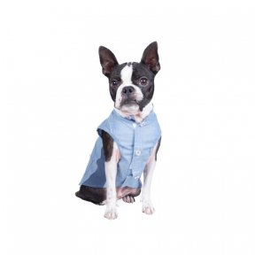 Boston Terrier Festival2020 撮影会参加者 集合ポスター/フライヤー