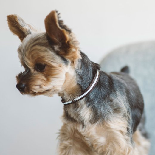 free stitch オリジナル 幼犬用 リフレクティブパピーカラー 3S