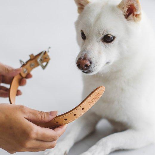 【犬用】 里親応援企画〔無料で首輪をプレゼントいたします〕