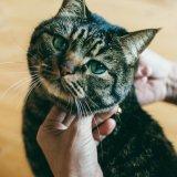 ◇【猫用】 里親応援企画〔無料で首輪をプレゼントいたします〕