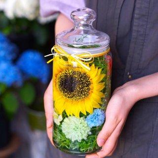 ホリフラワー sunflower-long-