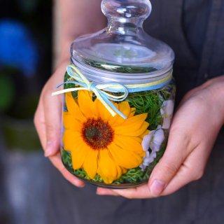 ホリフラワー sunflower-s-