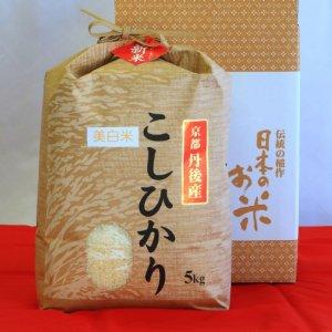 1等米丹後コシヒカリ 5Kg 美白精米