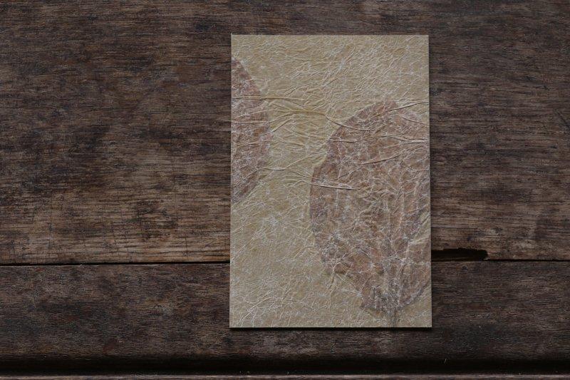 楓オリジナル 押葉書-7