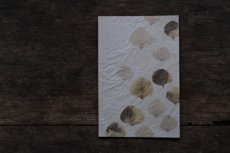 楓オリジナル 押葉書-8