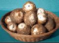 【厳選】上庄の里芋 大 5kg