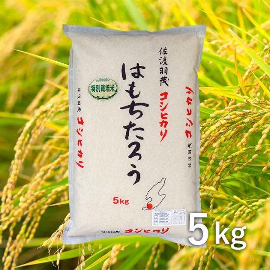 佐渡羽茂産コシヒカリ「はもちたろう」 5kg