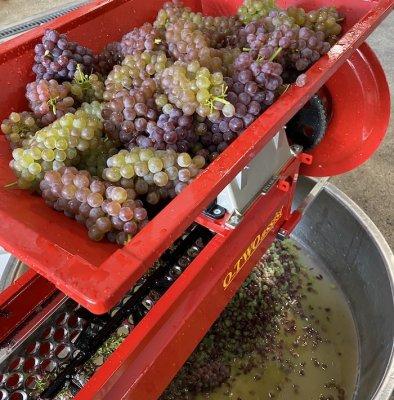 【OSAKAオレンジワインプロジェクト】30口限定プレミアムサポータープラン(オレンジワイン限定品5種飲み比べ付き)※同梱不可・常温便送料無料