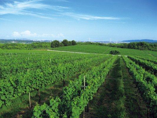 【KOBEブラッシュワインプロジェクト】サポータープラン※同梱不可&2022年内(秋頃)の完成予定