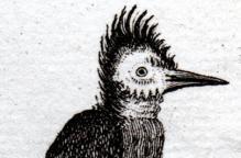 ギニアの鳥 アンティークプリント(1730年)