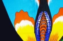 東アフリカ バタフライ柄のKikoy(キコイ)
