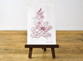 「花と言葉 │ Pearl Bailey(Ryosuke Aruse)」
