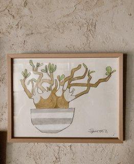 「パキポディウム+グレーボーダー鉢(ダイモンナオ)」