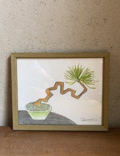 「松の豆盆栽+黄緑白鉢(ダイモンナオ)」