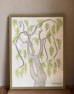 「黄緑実の木(ダイモンナオ)」