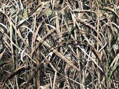Mossy Oak Shadow Grass Blades CORDURA 500D Nylon 生地