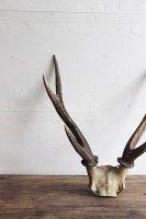 日本 古道具<br>鹿つの