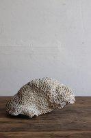 日本 古道具<br>珊瑚