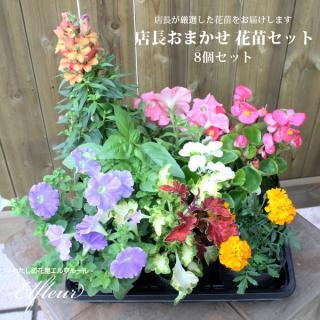 店長おまかせ 季節の花苗8個セット ガーデニング 園芸