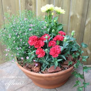 ギフト、ご自宅の庭先にもオススメ♪店長おまかせ!季節に合わせたお花の寄せ植え