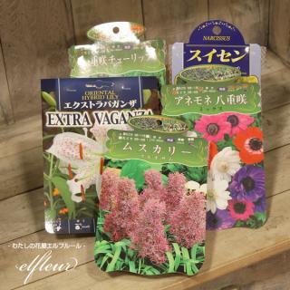 秋植え球根アソート 5袋入り 園芸 ガーデニング