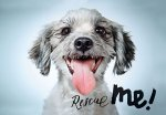 Richard Phibbs: Rescue Me: Dog Adoption Portraits and Stories from New York City