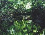 鈴木理策/ Risaku Suzuki: Water Mirror