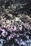 森山大道/ Daido Moriyama: Ango (日本語版)