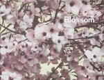 Thomas Demand: Blossom (特価品)