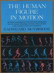 Eadweard Muybridge: Human Figure In Motion
