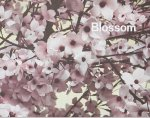 Thomas Demand: Blossom