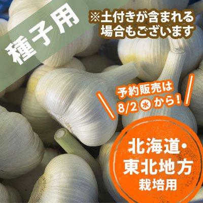 青森県産にんにく種子 北海道〜東北 10玉