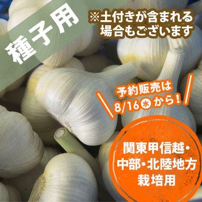 青森県産にんにく種子 関東〜北陸 10玉