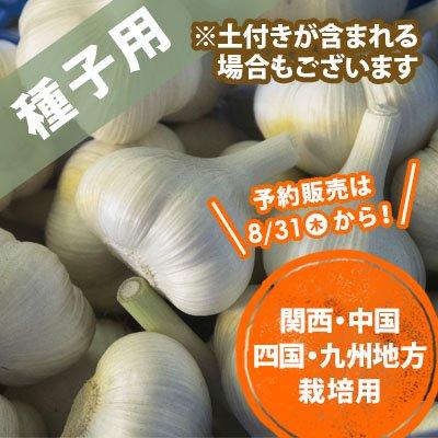 青森県産にんにく種子 関西〜九州 10玉