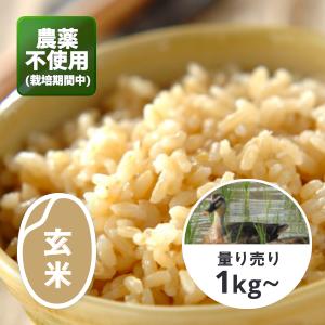千葉 アイガモ農法コシヒカリ(農薬不使用) 玄米1kg