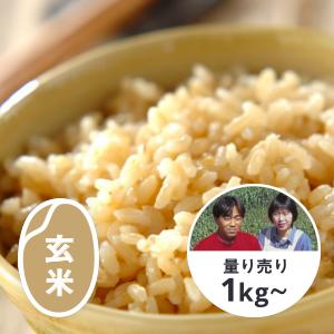 熊本 極献上 七城のヒノヒカリ 玄米1kg