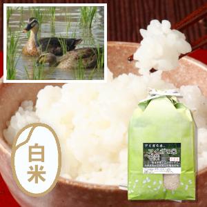 千葉 アイガモ農法コシヒカリ(農薬不使用)
