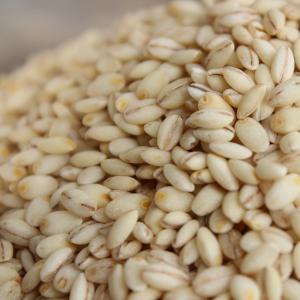 北海道 もち麦(キラリモチ)100g ※量り売り 最大8kg(80)まで