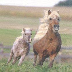 廃盤 Arabelia 草原を走る2頭の馬 1枚 バラ売り 33cm ペーパーナプキン デコパージュ ti-flair