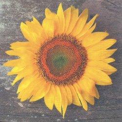 Sunny Sunflower 大きなひまわり 向日葵 Shutterstock 1枚 バラ売り 33cm ペーパーナプキン デコパージュ ppd