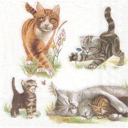 CATS FAMILY ちび猫ねこキャットファミリー 1枚 バラ売り 33cm ペーパーナプキン デコパージュ Ambiente