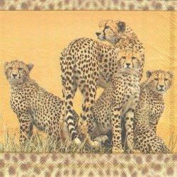 CHEETAH FAMILY 豹のファミリー 1枚 バラ売り 33cm ペーパーナプキン 紙ナプキン デコパージュ Ambiente