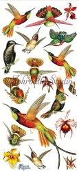 オレンジ色 南国の鳥のステッカー 1シート ヴィクトリアン シール ラベル ビクトリアン Victorian ラッピング