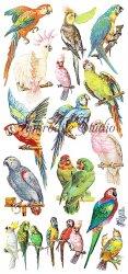 オウム 鸚鵡 parotsのステッカー 1シート ヴィクトリアン シール ラベル ビクトリアン Victorian ラッピング