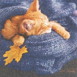 25cm Autumn cats 写真 オータム・キャッツ 秋の居眠り猫 1枚 バラ売り ペーパーナプキン デコパージュ 紙ナプキン Paper+Design