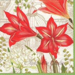 廃盤 CHRISTMAS BLOOMS 紅いアマリリス 王立園芸協会 1枚 ばら売り 33cm ペーパーナプキン デコパージュ用 Caspari カスパリ
