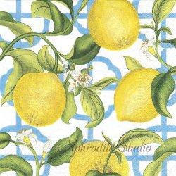 廃盤 SELVILLE レモン アイボリー ニューヨーク植物園 1枚 ばら売り 33cm ペーパーナプキン デコパージュ用 Caspari カスパリ