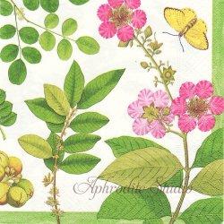 Coromandel Garden コロマンデル・ガーデン お花 Chatsworth House 1枚 ばら売り 33cm ペーパーナプキン デコパージュ用 Caspari カスパリ