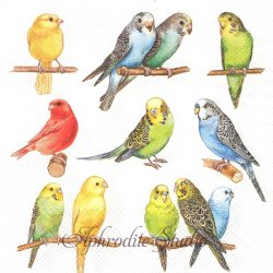 廃盤 BIRDIES インコ 小鳥 1枚 バラ売り 33cm ペーパーナプキン デコパージュ Ambiente