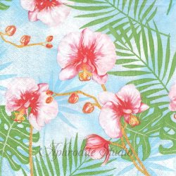 Tropical plants トロピカルなお花 蘭 1枚 バラ売り 33cm ペーパーナプキン デコパージュ用 Paper+Design
